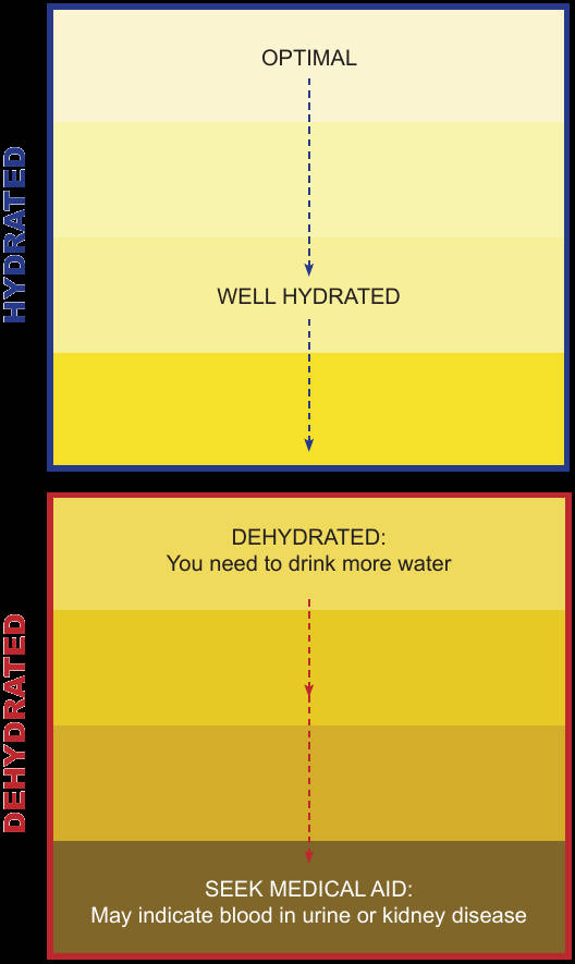Color urine test chart